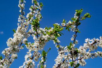 Photos of Kristina Silukova on the theme of spring